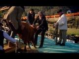 Эдвардианская ферма/ Edwardian Farm  (8 серия)